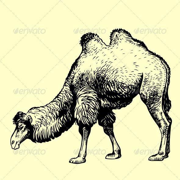 GraphicRiver Camel 5825901