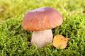 Big mushroom in forest