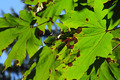 Rust Colored Holes in Leaves - PhotoDune Item for Sale