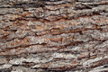 Pine Bark Surfaces Texture Backgrounds, Texture 5 - PhotoDune Item for Sale