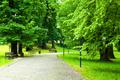 Park in Spring - PhotoDune Item for Sale