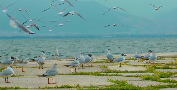 Pigeons and Seagulls 2