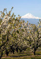 Hood Mountain Cascade Range Farmer Fruit Orchard - PhotoDune Item for Sale