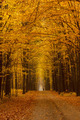 Yellow linden alley overcast autumn day - PhotoDune Item for Sale