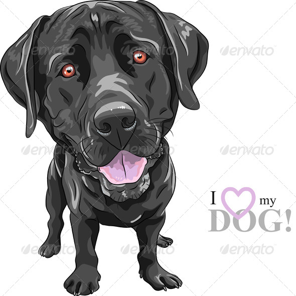 Vector Cartoon Black Dog Breed Labrador Ret - Animals Characters