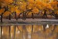 Poplar forest - PhotoDune Item for Sale