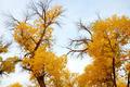 Poplars - PhotoDune Item for Sale