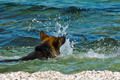 Dog at the Beach 4 - PhotoDune Item for Sale