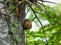 Snail 3 - PhotoDune Item for Sale