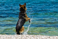 Dog at the Beach 3 - PhotoDune Item for Sale