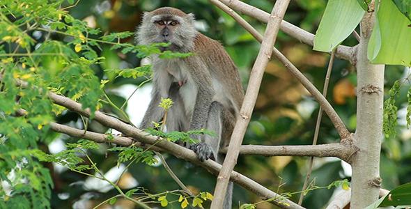 Wild Monkey 04