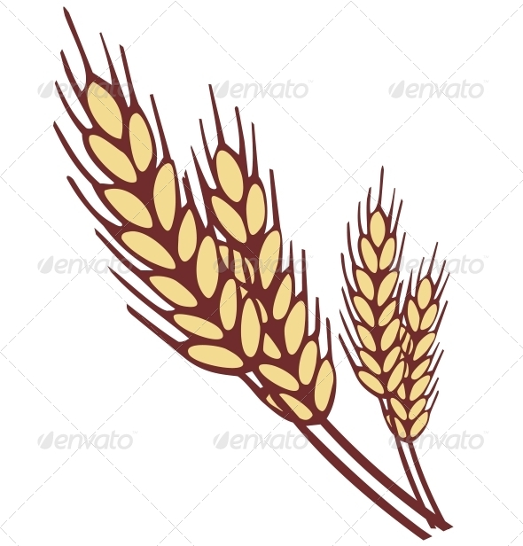 GraphicRiver Wheat Ear 5883507
