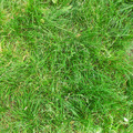 Grass Texture - PhotoDune Item for Sale