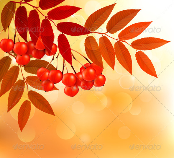 GraphicRiver Autumn Background with Colorful Leaves and Rowan 5891952