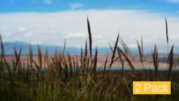 Prairie Grass 2-Pack
