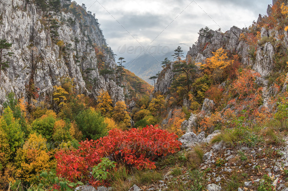 Tasnei Gorge - Stock Photo - Images