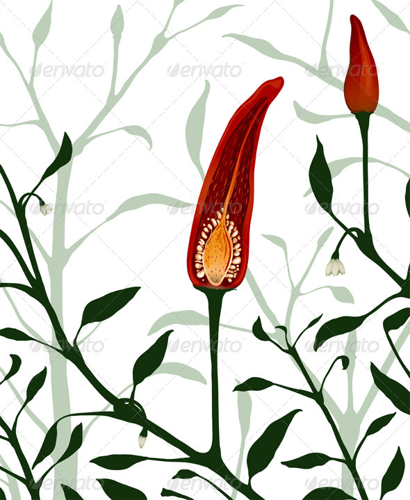 GraphicRiver Botanical Red Chilli Pepper Section Plant 5917407