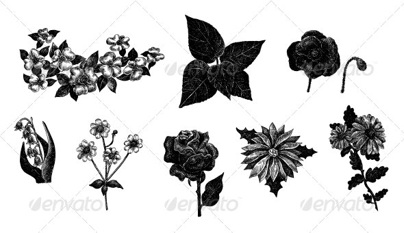 GraphicRiver Vector Set of Hand Drawn Ink Vintage Flowers 5919126