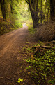 Pathway in the Woods - PhotoDune Item for Sale
