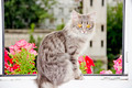 Cat On Window - PhotoDune Item for Sale
