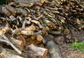 Firewoods - PhotoDune Item for Sale
