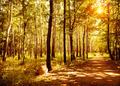 Walkway in autumn park - PhotoDune Item for Sale