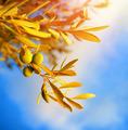 Olive tree branch - PhotoDune Item for Sale