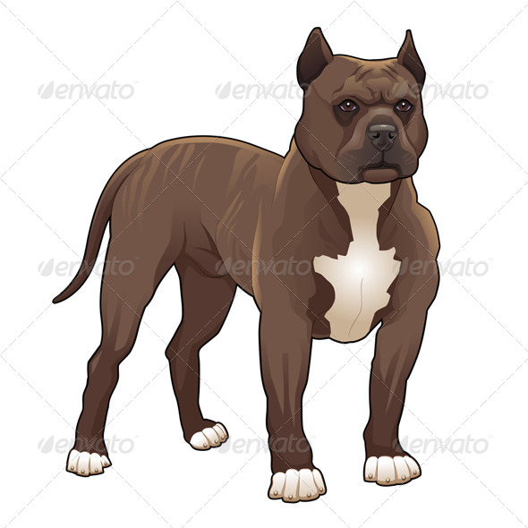 GraphicRiver Pitbull 5929424