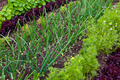 Vegetable Garden - PhotoDune Item for Sale