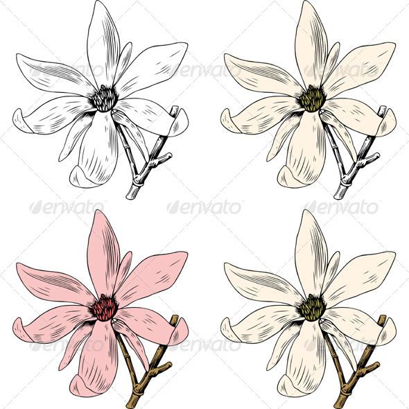 GraphicRiver Anise Magnolia 5953316