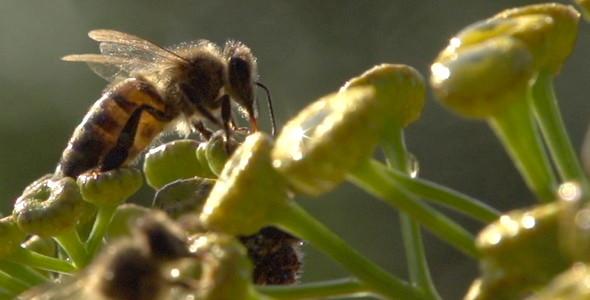 Bee 12