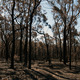 After the Bushfire - PhotoDune Item for Sale