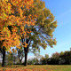 Autumn In The Park - VideoHive Item for Sale