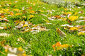 Autumn Leaves In Fresh Green Grass - PhotoDune Item for Sale