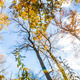 Epic Autumn Forest - VideoHive Item for Sale