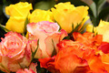 Colorful roses - PhotoDune Item for Sale