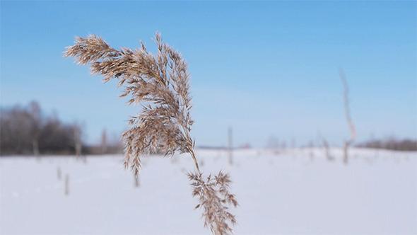 VideoHive Snowy Landscape 3 5973898