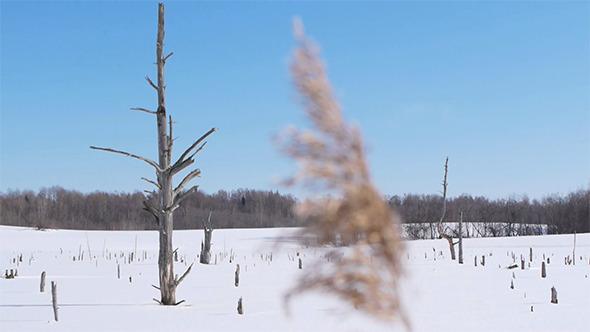 VideoHive Snowy Landscape 4 5974012