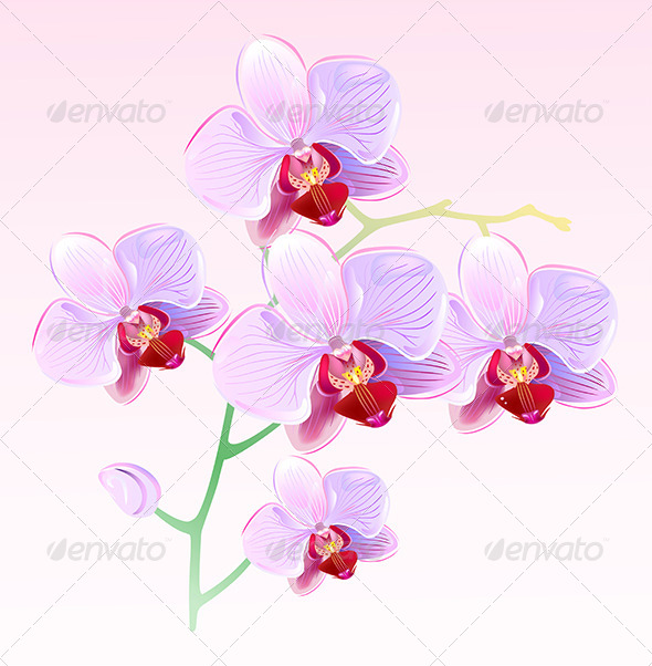 GraphicRiver Pink Orchids Spring Branch 5975312