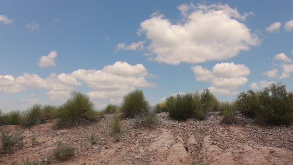 Grass In The Desert And Clouds