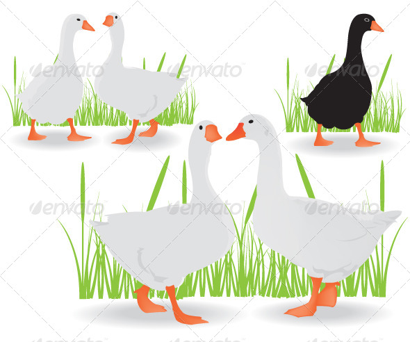 GraphicRiver Geese Black and White 5979460