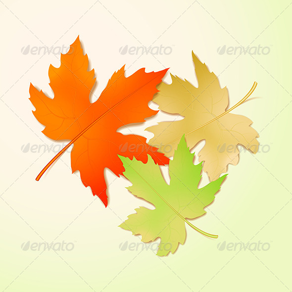 GraphicRiver Autumn Maple Leaves 5980392