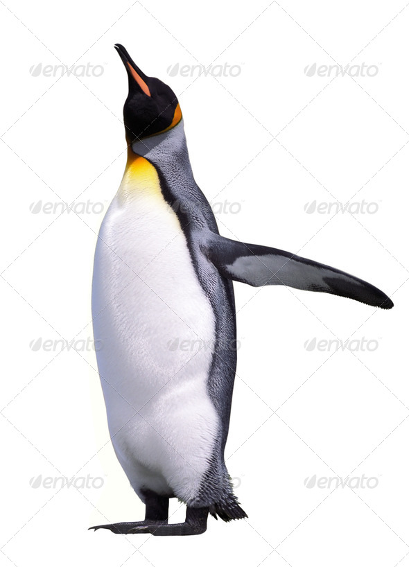 Isolated penguin - Stock Photo - Images