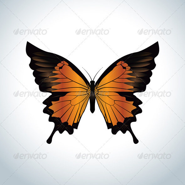 GraphicRiver Orange Butterfly 5989610