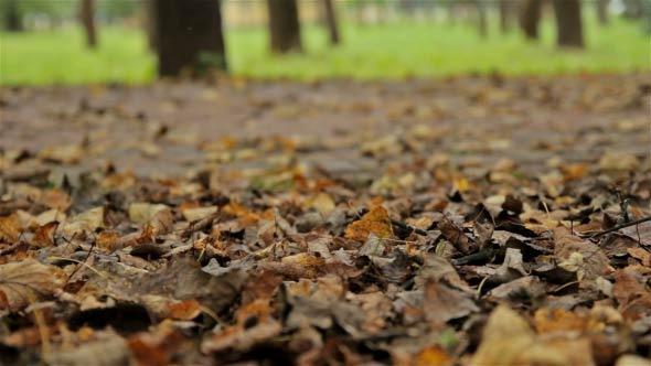Fallen Foliage Close Up Horizontal Dolly Shot