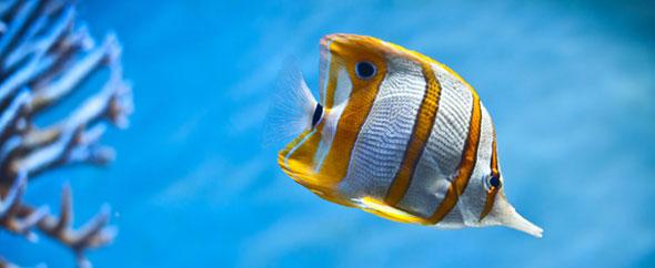 Sea fish wallpaper
