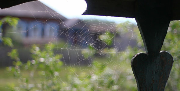 Spider Web Country House 2