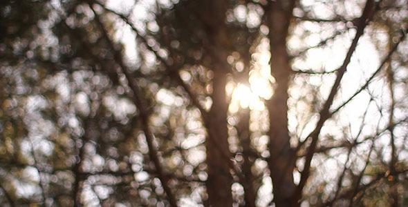 Sunshine Bokeh