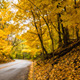 Epic Late Autumn Forest - VideoHive Item for Sale