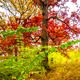 Cinematic Autumn Colors - VideoHive Item for Sale